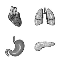 Heart lungs stomach pancreas human organs set vector