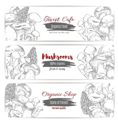 Mushrooms sketch organic shop banners vector image