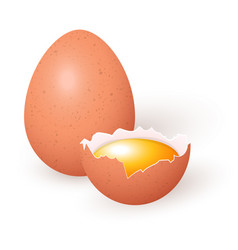 a whole chicken egg and a half egg with yolk vector image