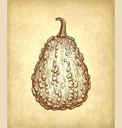 Ink sketch of gourd vector