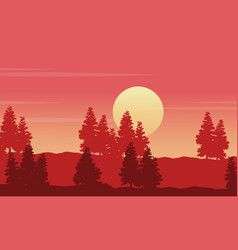silhouette of spruce on hill at sunset scenery vector image vector image