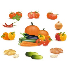 Super group some vegetables vector