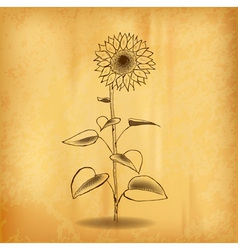 Sun flower on the old background vector