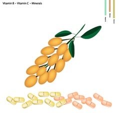Burmese grape with vitamin b c and minerals vector
