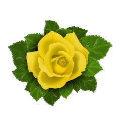 Yellow rose flower with leaves vector