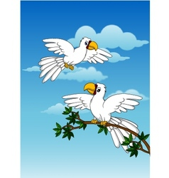 Cute couple white parrot vector