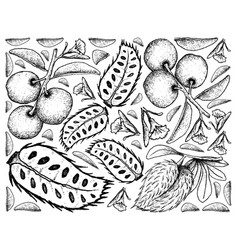 Hand drawn background of fresh tallow plum and sou vector