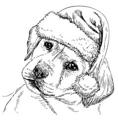 Labrador retriever 07 vector