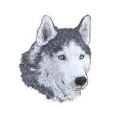 New year 2018 congratulation card husky dog in vector