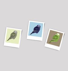 Polaroid photo of owl vector