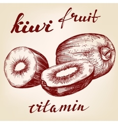 Fruit kiwi set hand drawn llustration vector