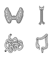 Thyroid gland spine small intestine large vector