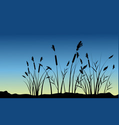 coarse grass on hill scenery silhouettes vector image vector image
