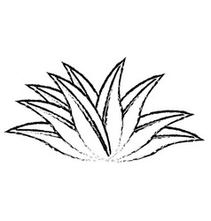Plant leaves natural tropical sketch icon vector