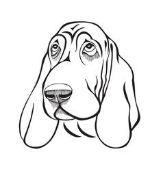 Dog breed basset head vector