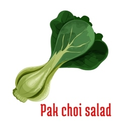 Bok choy or chinese cabbage vegetable icon vector image