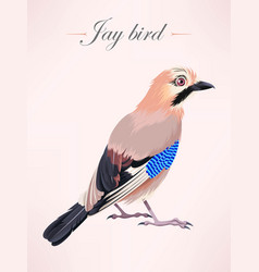 ilustration of eurasian jay vector image