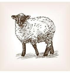 Sheep hand drawn sketch vector image