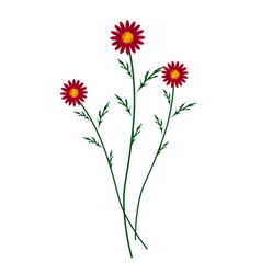 Red daisy blossoms on a white background vector