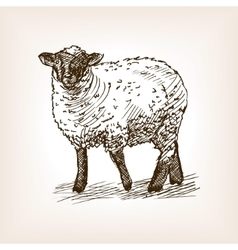 Sheep hand drawn sketch vector image