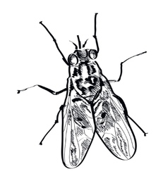 fly insect hand drawn on a background vector image