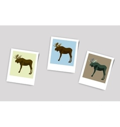 Polaroid photo of moose vector