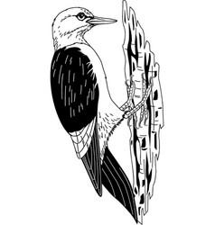 Tg00027 woodpecker vector