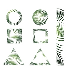 Jungle palm leaves design vector