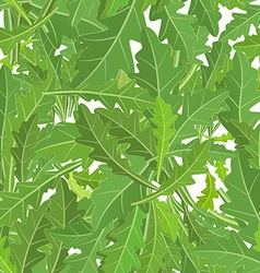 seamless texture of leaf arugula vector image vector image
