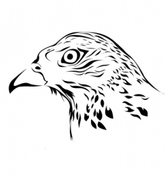 wild hawk vector image