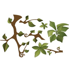 Set of branches and leaves vector image