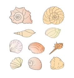 Set of shells vector