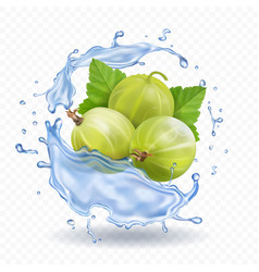gooseberry fruit in water splash with leaves vector image vector image