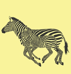 Zebra running vector