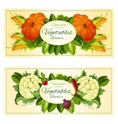 Vegetables and salad greens banners set vector