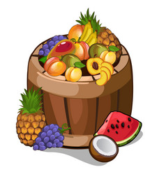 Barrel with mouth-watering tropical fruits vector