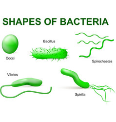 bacteria tip2 vector image
