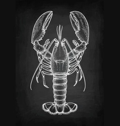 Chalk sketch of lobster vector