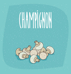 isolated white mushrooms bisporus or champignon vector image