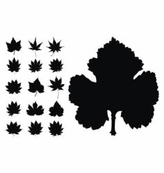 Maples leaves collection vector