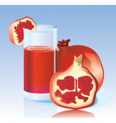 fresh garnet juice vector image