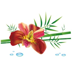 iris flower and bamboo vector image