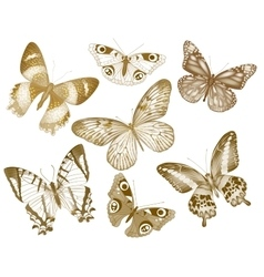 Set of butterflies insect vintage vector