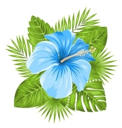 Beautiful blue hibiscus flowers blossom and vector