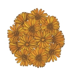 Composition with calendula flowers vector