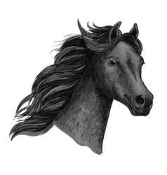 Portrait of beautiful purebred raven horse vector