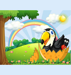 Toucan bird hatching egg in garden vector