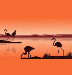 silhouette of flamingo on lake landscape vector image vector image