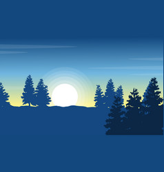 At morning spruce landscape silhouettes vector