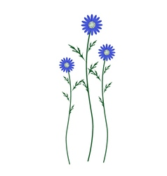 Blue Daisy Blossoms on A White Background vector image vector image